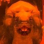 Mutter Ratzinski ~ Mother Ratzinsky ~ Матка волчьих крыс