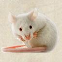 Dämonisierte Maus