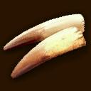 Wildschweinhauer ~ Wild Boar Tusks ~ Бивни кабана